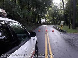 A tree with power lines down across Warren Avenue in East Whiteland Township.